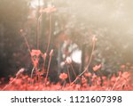 beautiful vintage cosmos... | Shutterstock . vector #1121607398