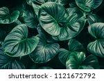 Tropical Leaf Background  Dark...