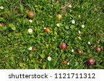 daisies flowers and apples in...   Shutterstock . vector #1121711312