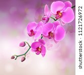pink purple orchids flowers on... | Shutterstock .eps vector #1121726972
