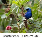 a beautiful blue turquoise and... | Shutterstock . vector #1121895032
