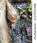a snail is finding some food | Shutterstock . vector #1121910188