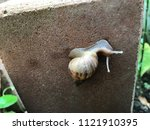 a snail is finding some food | Shutterstock . vector #1121910395