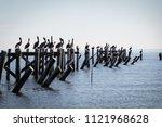 Pelicans On A Pier In Water
