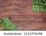 herbal frame with artemisia... | Shutterstock . vector #1121976458