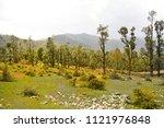 "reclusive ""choukry""  solitude... | Shutterstock . vector #1121976848"