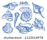 Seashell  Mollusk Sea Shell...