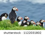 Puffins on Mykines, Faroe islands