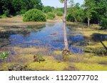 beautiful swamp fauna  swamp... | Shutterstock . vector #1122077702