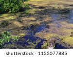 beautiful swamp fauna  swamp... | Shutterstock . vector #1122077885