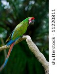 military macaw   Shutterstock . vector #11220811