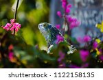 iguana in the flowers   Shutterstock . vector #1122158135