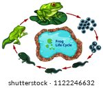 the frog life cycle illustration | Shutterstock .eps vector #1122246632