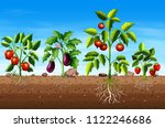 set of different vegetable and... | Shutterstock .eps vector #1122246686