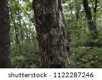 tree trunk  close up. depths of ... | Shutterstock . vector #1122287246