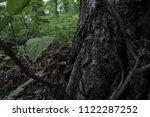 base of oak tree  close up.... | Shutterstock . vector #1122287252