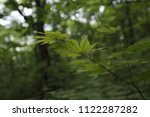 thin branch with green leaves ... | Shutterstock . vector #1122287282