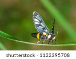 butterfly in the middle | Shutterstock . vector #1122395708