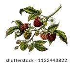 raspberry branch botanical... | Shutterstock . vector #1122443822