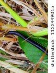 black centipede in the grass | Shutterstock . vector #1122449015