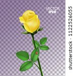 yellow rose isolated with... | Shutterstock .eps vector #1122526055