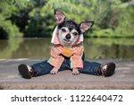 cute chihuahua wearing pants... | Shutterstock . vector #1122640472