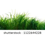 green grass isolated on white... | Shutterstock . vector #1122644228