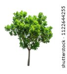 isolated tree on white... | Shutterstock . vector #1122644255