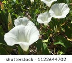 close up spring white flowers... | Shutterstock . vector #1122644702