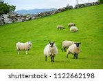 sheep marked with colorful dye... | Shutterstock . vector #1122662198