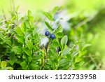 bush of a ripe bilberry closeup.... | Shutterstock . vector #1122733958