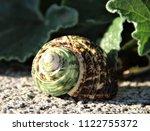green sea shell   Shutterstock . vector #1122755372