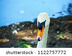 close up with swan              ...   Shutterstock . vector #1122757772