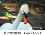 close up with swan              ...   Shutterstock . vector #1122757775
