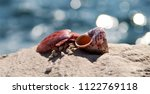 red sea shells   Shutterstock . vector #1122769118
