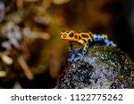 mimic poison frog  ranitomeya... | Shutterstock . vector #1122775262