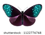 Stock photo close up of abstract color purple teal striped blue crow euploea mulciber butterfly isolated on 1122776768