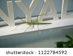 stick insect native to... | Shutterstock . vector #1122784592