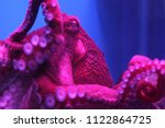 giant live octopus in neon... | Shutterstock . vector #1122864725