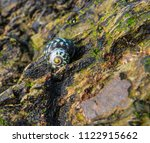 sea snail  beautiful colored... | Shutterstock . vector #1122915662
