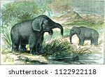 Deinotherium and mastodon of Miocene period, vintage engraved illustration. From Natural Creation and Living Beings.
