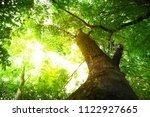 green tree leaves background... | Shutterstock . vector #1122927665
