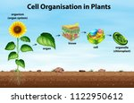 Cell Organisation In Plants...