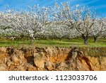 cherry blossom in jerte valley... | Shutterstock . vector #1123033706