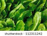 macro on green hygiene vegetable   Shutterstock . vector #112311242