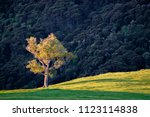 a very lonely tree. the sun was ...   Shutterstock . vector #1123114838