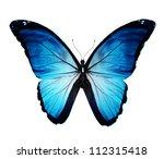 Stock photo morpho blue butterfly isolated on white 112315418