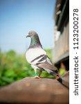 close up full body of speed... | Shutterstock . vector #1123200278