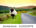 sheep marked with colorful dye... | Shutterstock . vector #1123223978