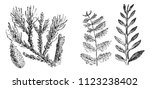 vegetable fossils of the... | Shutterstock .eps vector #1123238402